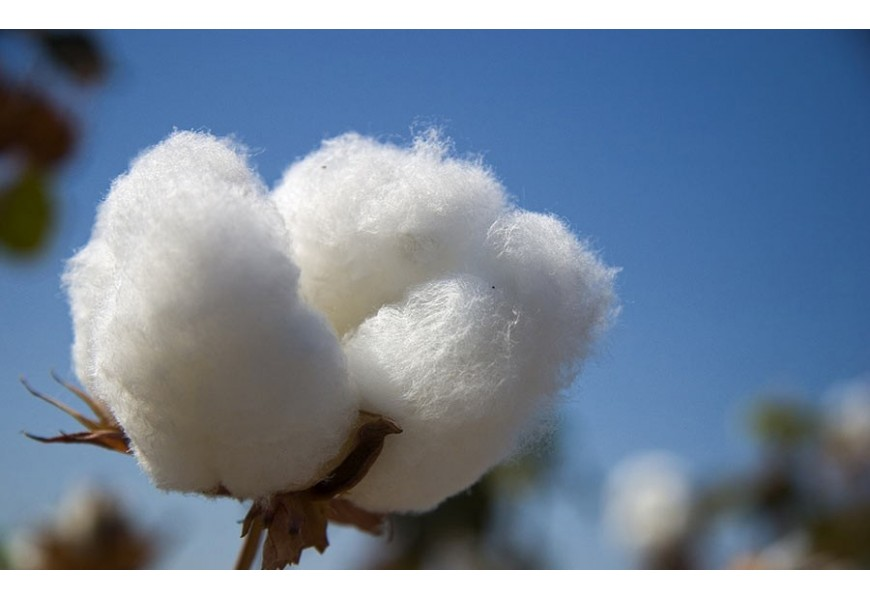 coppia Federe cotone per cuscini