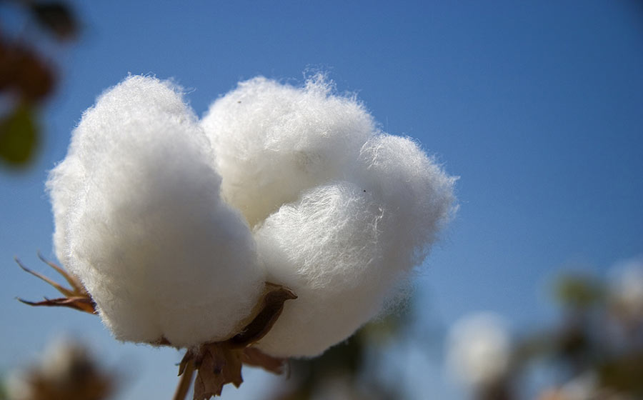 materasso naturale cotone